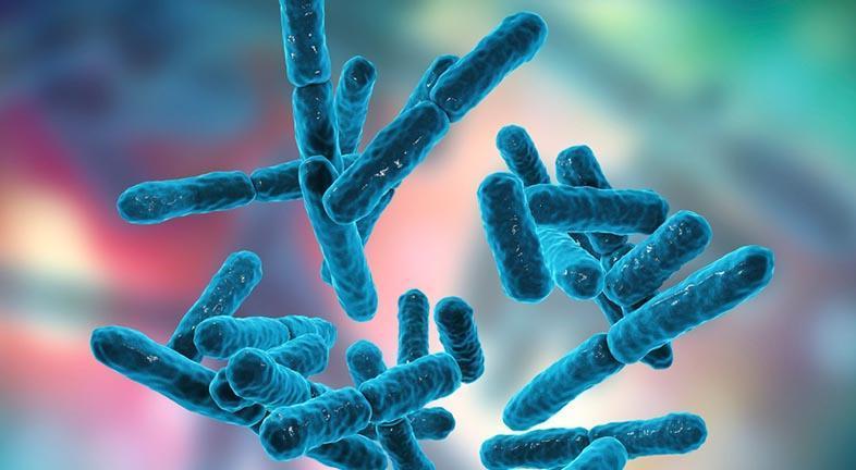 Darmbacteriën om van te houden